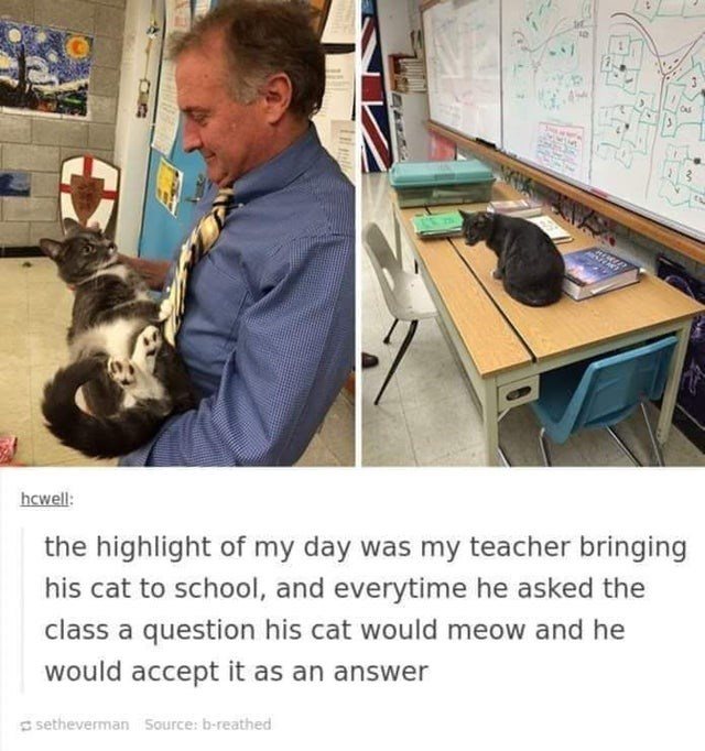 Table - hcwell: the highlight of my day was my teacher bringing his cat to school, and everytime he asked the class a question his cat would meow and he would accept it as an answer S setheverman Source: b-reathed