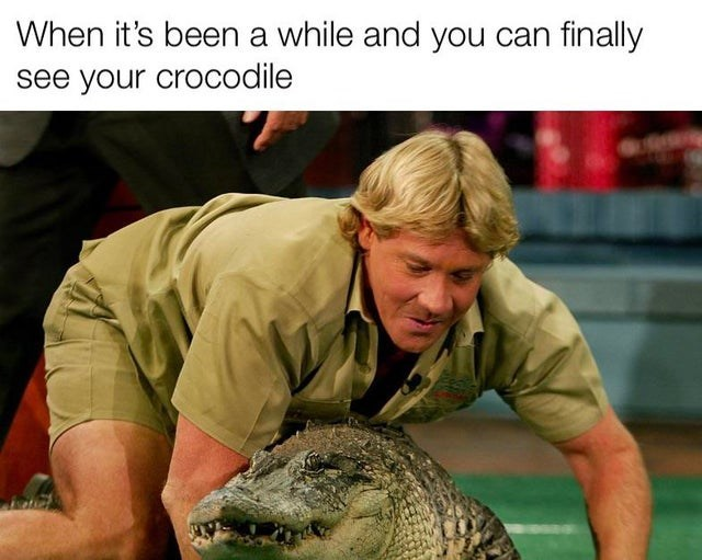 Mammal - When it's been a while and you can finally see your crocodile