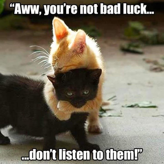 """Cat - """"Aww, you're not bad luck. don't listen to them!"""