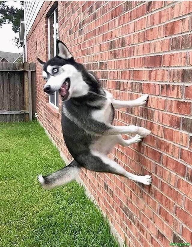Dog - okaboxyz.com