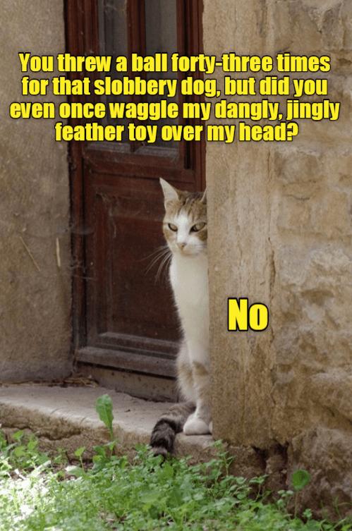 cat memes - 9595418368