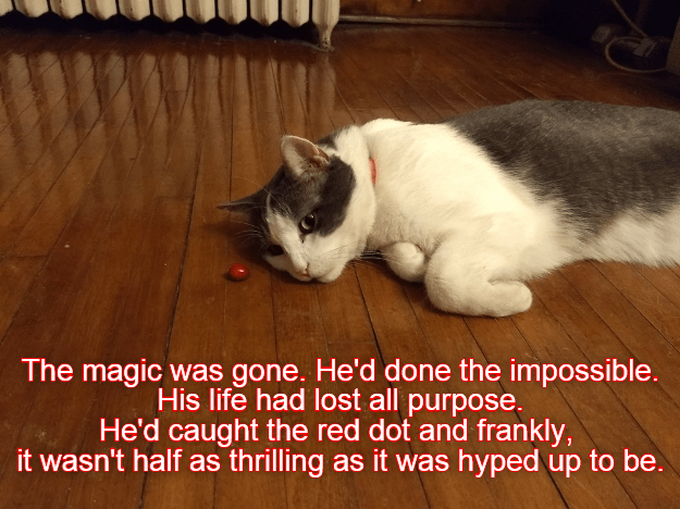 The magic was gone. He'd done the impossible. His life had lost all purpose. He'd caught the red dot and frankly, it wasn't half as thrilling as it was hyped up to be. | cat lying on the floor next to a red bean pebble