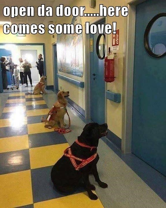 open the door here comes some love | pic of three dogs waiting in front of doors in a hallway