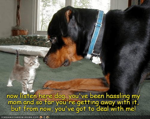 now listen here dog you've been hassling my mom and so far you are getting away with but from now, you've got to deal with me! | funny pic of an adorable kitten standing up to a big dog