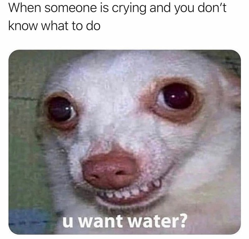Dog - When someone is crying and you don't know what to do u want water?