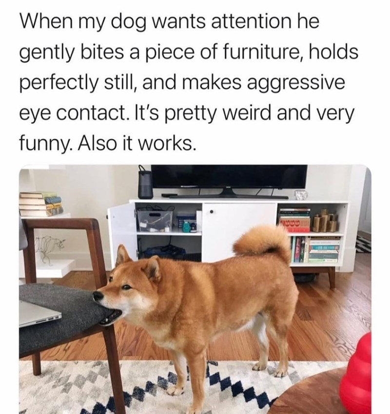 Furniture - When my dog wants attention he gently bites a piece of furniture, holds perfectly still, and makes aggressive eye contact. It's pretty weird and very funny. Also it works.