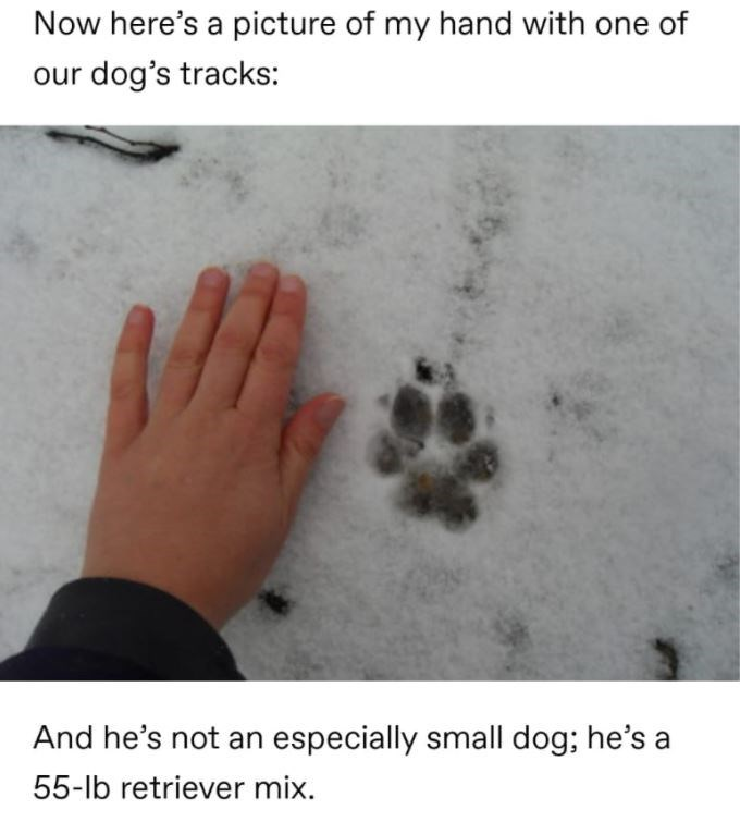 Hand - Now here's a picture of my hand with one of our dog's tracks: And he's not an especially small dog; he's a 55-lb retriever mix.