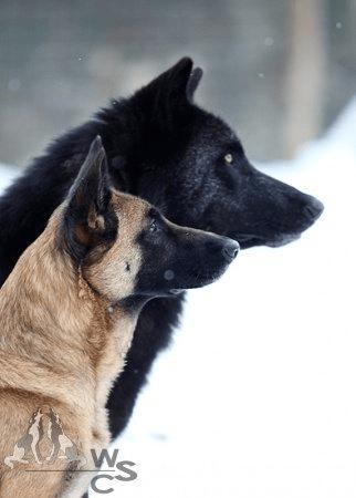Dog - We