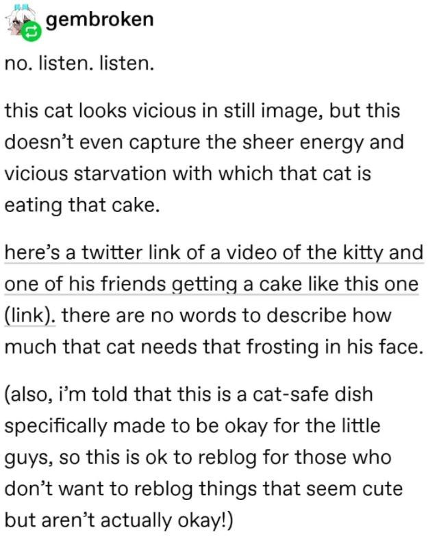 Font - gembroken no. listen. listen. this cat looks vicious in still image, but this doesn't even capture the sheer energy and vicious starvation with which that cat is eating that cake. here's a twitter link of a video of the kitty and one of his friends getting a cake like this one (link). there are no words to describe how much that cat needs that frosting in his face. (also, i'm told that this is a cat-safe dish specifically made to be okay for the little guys, so this is ok to reblog for th
