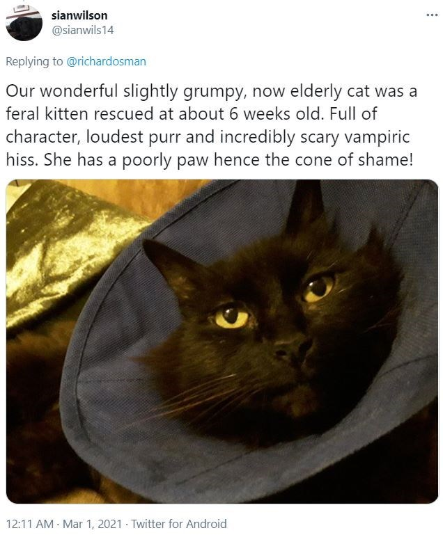 Cat - sianwilson ... @sianwils14 Replying to @richardosman Our wonderful slightly grumpy, now elderly cat was a feral kitten rescued at about 6 weeks old. Full of character, loudest purr and incredibly scary vampiric hiss. She has a poorly paw hence the cone of shame! 12:11 AM - Mar 1, 2021 · Twitter for Android