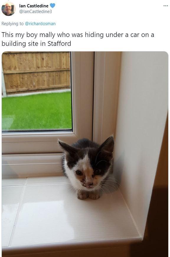 Cat - lan Castledine ... @lanCastledine3 Replying to @richardosman This my boy mally who was hiding under a car on a building site in Stafford