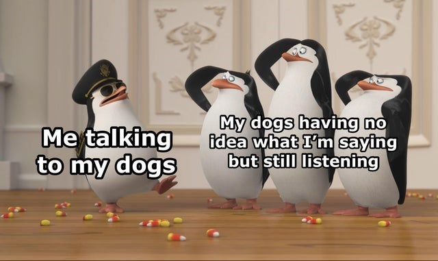 Bird - Me talking to my dogs My dogs having no idea what I'm saying but still listening
