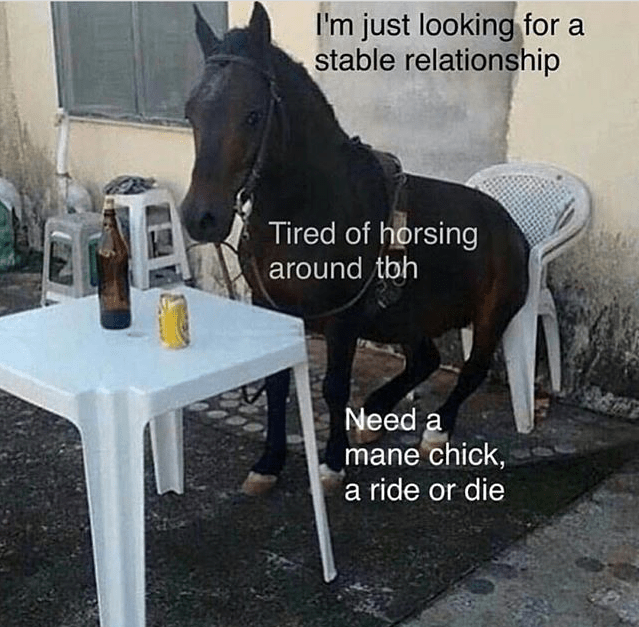 Horse - I'm just looking for a stable relationship Tired of horsing around tbh Need a mane chick, a ride or die