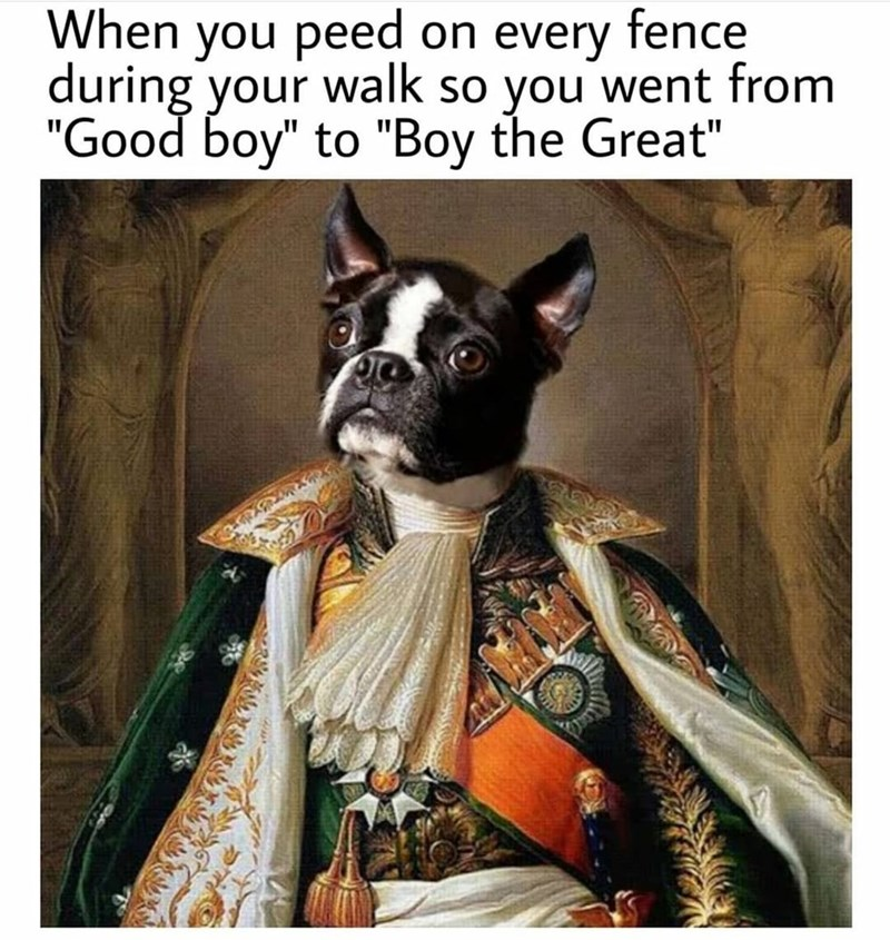 """Dog - When you peed on every fence during your walk so you went from """"Good boy"""" to """"Boy the Great"""""""