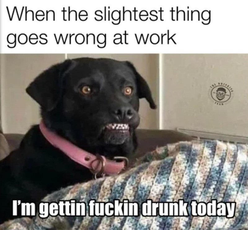 Dog - When the slightest thing goes wrong at work FEAN I'm gettin fuckin drunk today