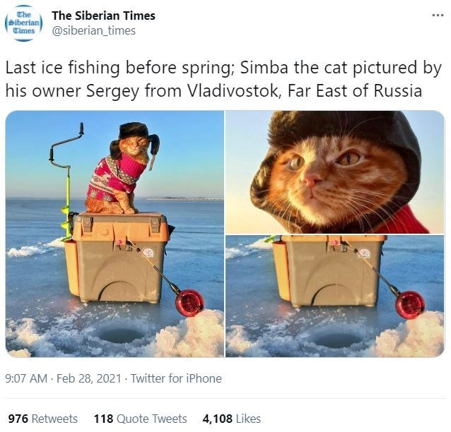 Water - Che The Siberian Times ... Biberian Times @siberian_times Last ice fishing before spring; Simba the cat pictured by his owner Sergey from Vladivostok, Far East of Russia 9:07 AM Feb 28, 2021 · Twitter for iPhone 976 Retweets 118 Quote Tweets 4,108 Likes