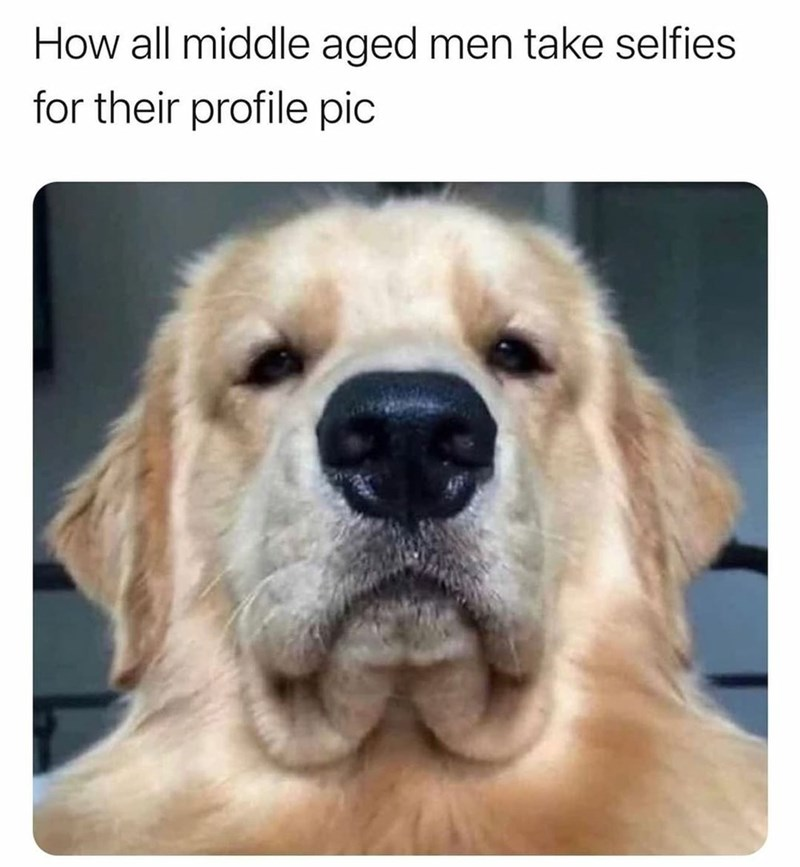 Dog - How all middle aged men take selfies for their profile pic