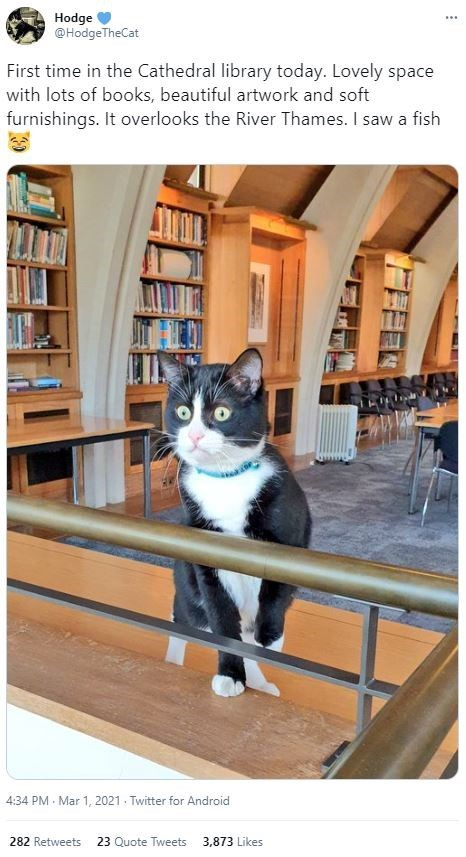 Furniture - Hodge @HodgeTheCat ... First time in the Cathedral library today. Lovely space with lots of books, beautiful artwork and soft furnishings. It overlooks the River Thames. I saw a fish 4:34 PM Mar 1, 2021 · Twitter for Android 282 Retweets 23 Quote Tweets 3,873 Likes