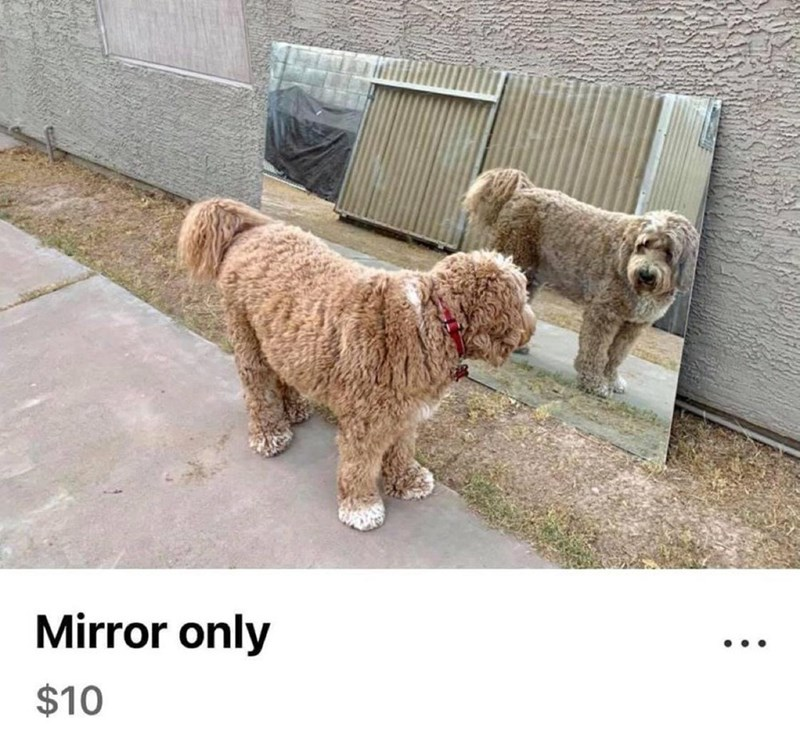 Dog - Mirror only $10