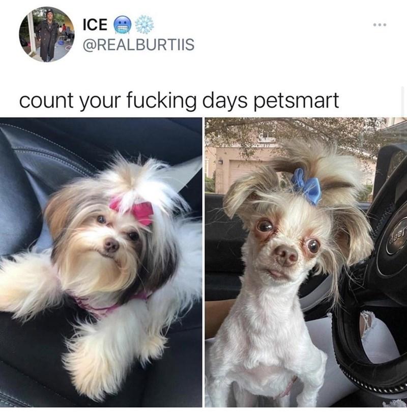 Dog - ICE @REALBURTIIS count your fucking days petsmart