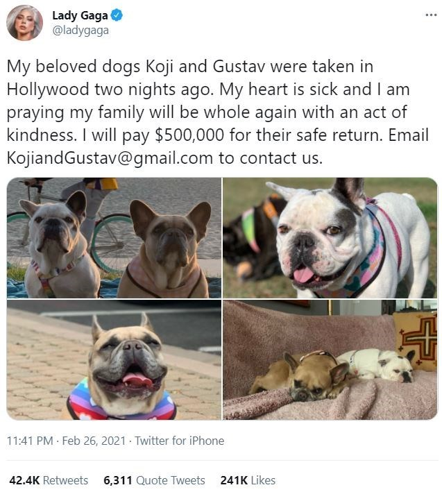 Dog - Lady Gaga @ladygaga ... My beloved dogs Koji and Gustav were taken in Hollywood two nights ago. My heart is sick and I am praying my family will be whole again with an act of kindness. I will pay $500,000 for their safe return. Email KojiandGustav@gmail.com to contact us. 11:41 PM Feb 26, 2021 Twitter for iPhone 42.4K Retweets 6,311 Quote Tweets 241K Likes