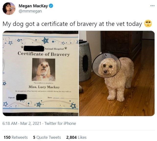 Dog - Megan Mackay O @mmmegan My dog got a certificate of bravery at the vet today Animal Hospital Certificate of Bravery This eifente in anled Miss. Lucy Mackay In regnitin uf her heavry and poitive sttitud during her stay with Signed: Date 6:18 AM Mar 2, 2021 - Twitter for iPhone 150 Retweets 5 Quote Tweets 2,804 Likes
