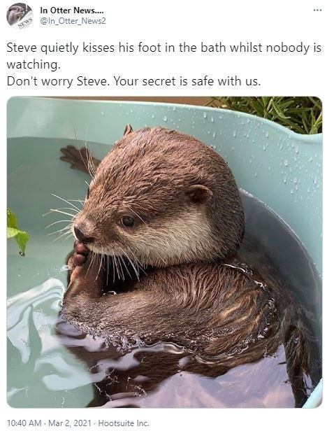 Water - In Otter News. @in_Otter_News2 NEWS Steve quietly kisses his foot in the bath whilst nobody is watching. Don't worry Steve. Your secret is safe with us. 10:40 AM - Mar 2, 2021 - Hootsuite Inc.