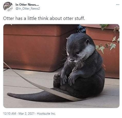 Carnivore - In Otter News.. @ln_Otter_News2 NEWS ... Otter has a little think about otter stuff. 12:10 AM Mar 2, 2021 - Hootsuite Inc.