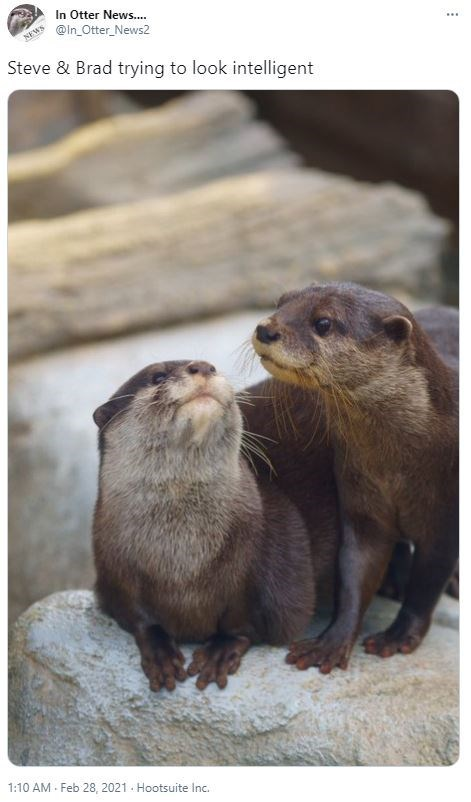 Organism - In Otter News.. @in_Otter_News2 NEWS ... Steve & Brad trying to look intelligent 1:10 AM - Feb 28, 2021 - Hootsuite Inc.