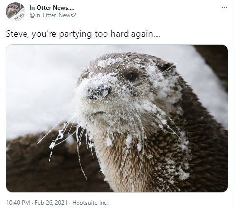 Otter - In Otter News... @ln_Otter_News2 NEWS Steve, you're partying too hard again. 10:40 PM · Feb 26, 2021 - Hootsuite Inc.
