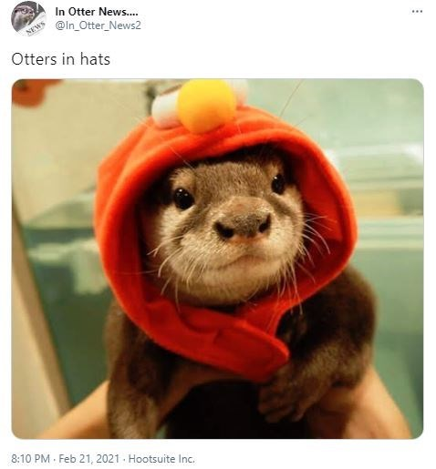 Glasses - In Otter News.. @In_Otter_News2 NEWS ... Otters in hats 8:10 PM · Feb 21, 2021 . Hootsuite Inc.