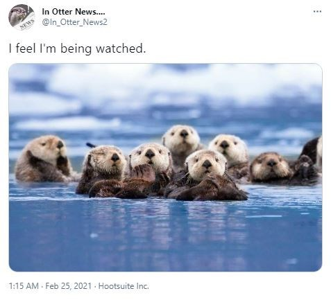 Water - In Otter News.. @ln_Otter_News2 NEWS I feel l'm being watched. 1:15 AM - Feb 25 , 2021 - Hootsuite Inc.