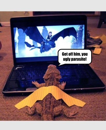 get off him you ugly parasite | funny pic of a lizard bearded dragon with paper wings watching How To Train Your Dragon