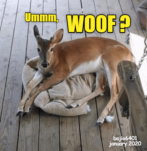 umm WOOF? | funny pic of a deer chilling in a dog bed