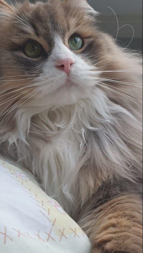 Cat - (XXX