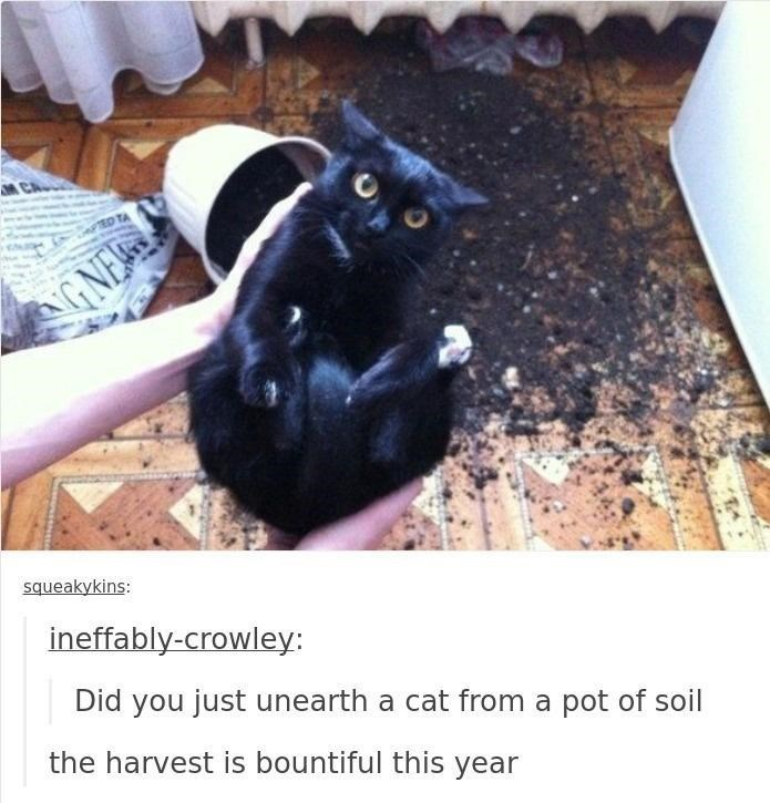Cat - TED TA G NE squeakykins: ineffably-crowley: Did you just unearth a cat from a pot of soil the harvest is bountiful this year
