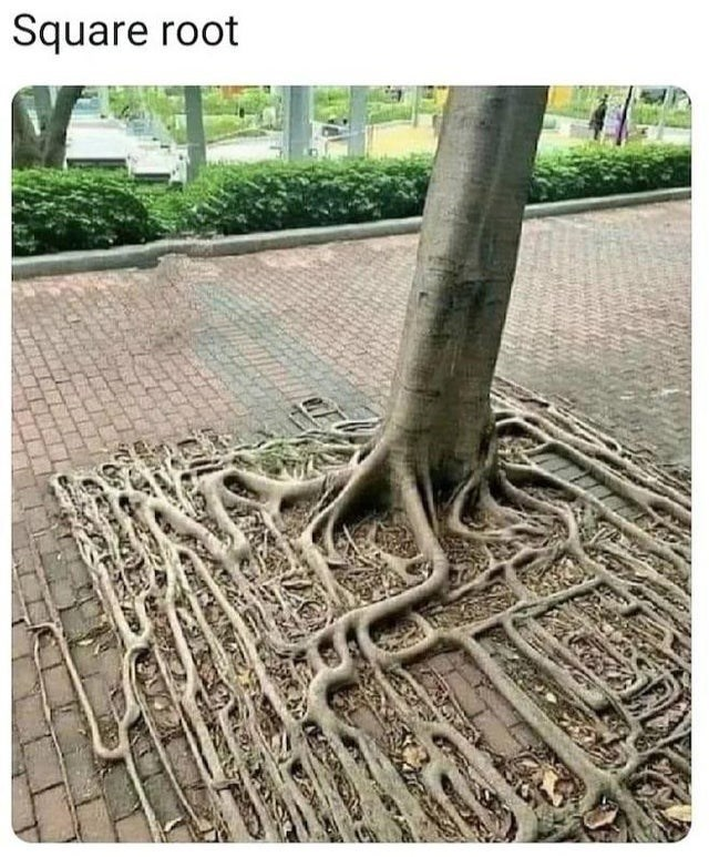 Plant - Square root
