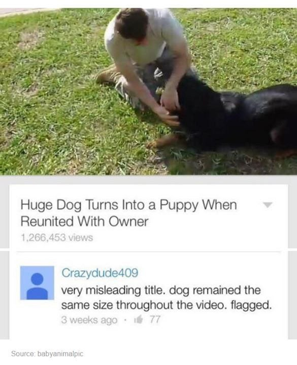 Dog - Huge Dog Turns Into a Puppy When Reunited With Owner 1,266,453 views Crazydude409 very misleading title. dog remained the same size throughout the video. flagged. 3 weeks ago 77 Source: babyanimalpic