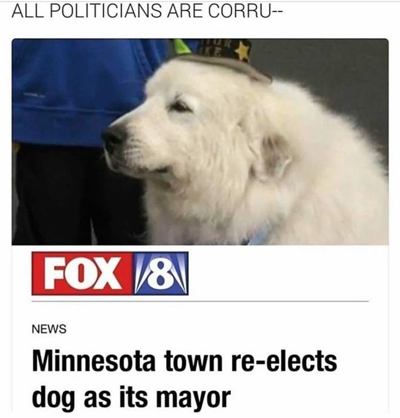 Dog - ALL POLITICIANS ARE CORRU-- FOX /8 NEWS Minnesota town re-elects dog as its mayor