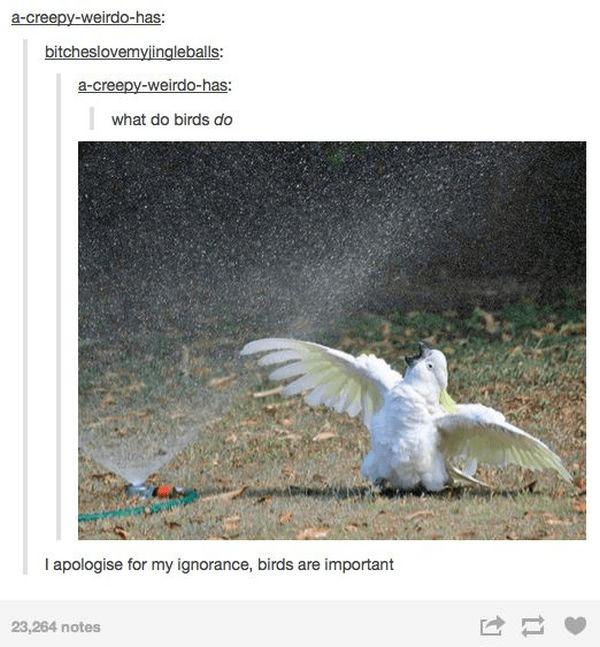 Bird - a-creepy-weirdo-has: bitcheslovemyjingleballs: a-creepy-weirdo-has: what do birds do I apologise for my ignorance, birds are important 23,264 notes