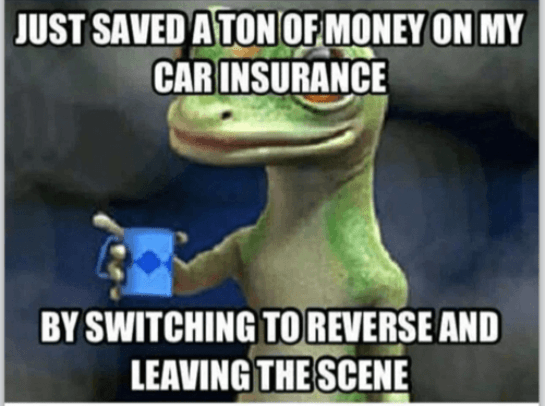 Nature - JUST SAVED A TON OF MONEY ON MY CAR INSURANCE BY SWITCHING TO REVERSE AND LEAVING THE SCENE