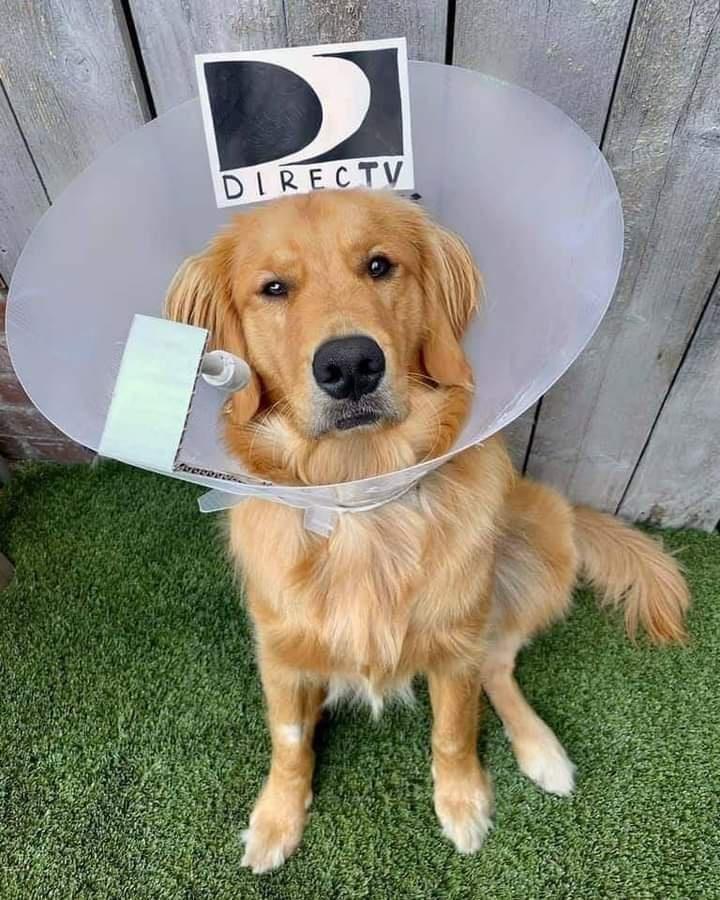 Dog - DIRECTV