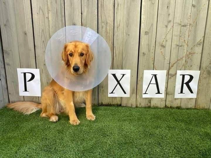 Dog - P. XAR