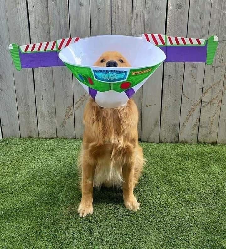 Dog - SPACE RANGER