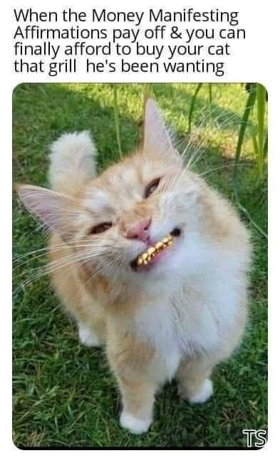 Cat - When the Money Manifesting Affirmations pay off & you can finally afford'to buy your cat that grill he's been wanting TS