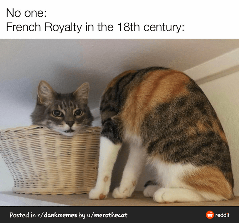 Cat - No one: French Royalty in the 18th century: Posted in r/dankmemes by u/merothecat e reddit