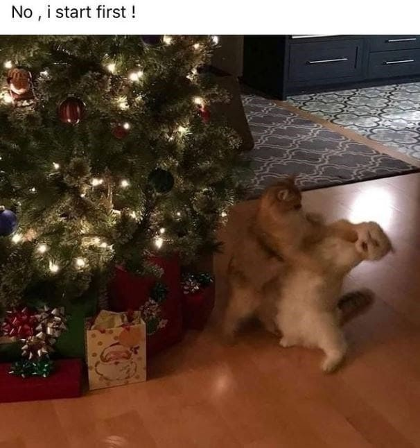 Christmas tree - No, i start first!