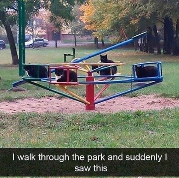 Plant - I walk through the park and suddenly I saw this