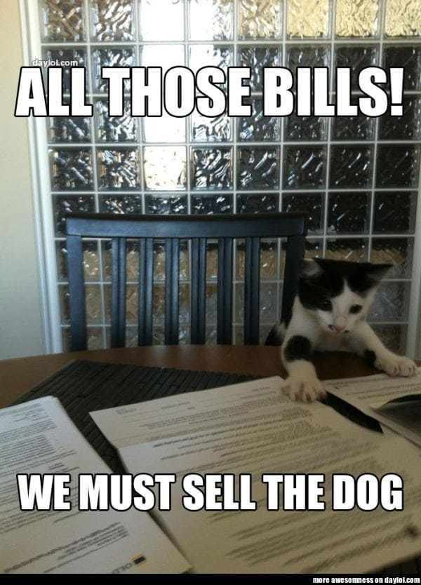 Cat - daylolcom ALL THOSE BILLS! WE MUST SELL THE DOG TIO more awesomness on daylol.com