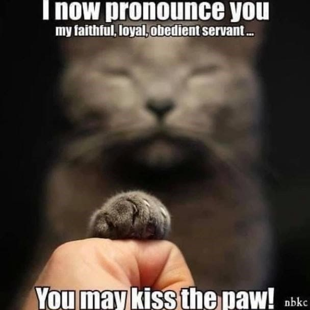 Hand - I now pronounce you my faithful, loyal, obedient servant. You may kiss the paw! nbkc